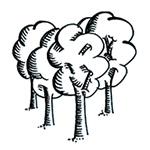 region-trees-v4-150-150-